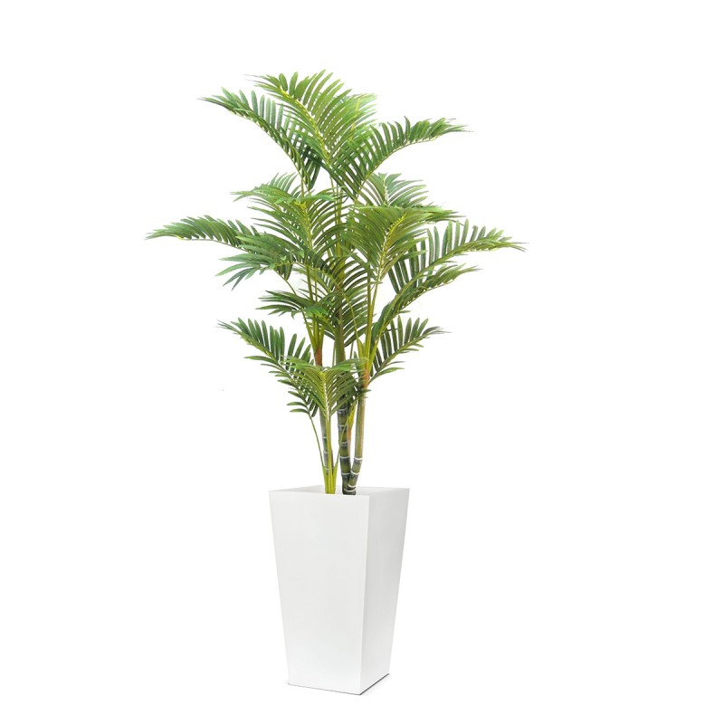 4ft Kentia Palm Tree
